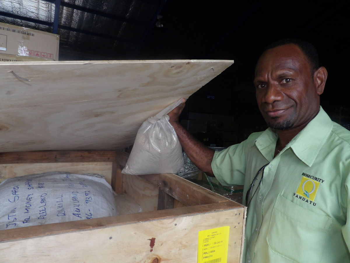 Vanuatu Government OFficials dealing with Kava Processing