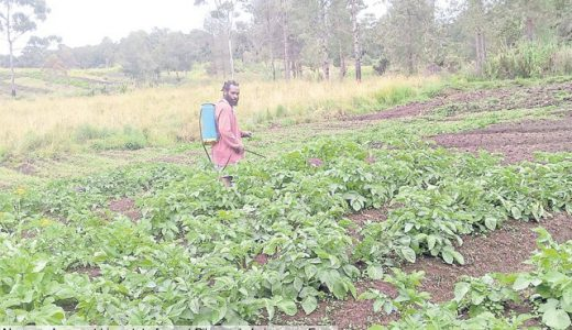 Farmers call on Enga govt to help them get a fair deal
