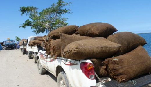 Bags of copra being transported to the wharf on Malekula. Photo: File